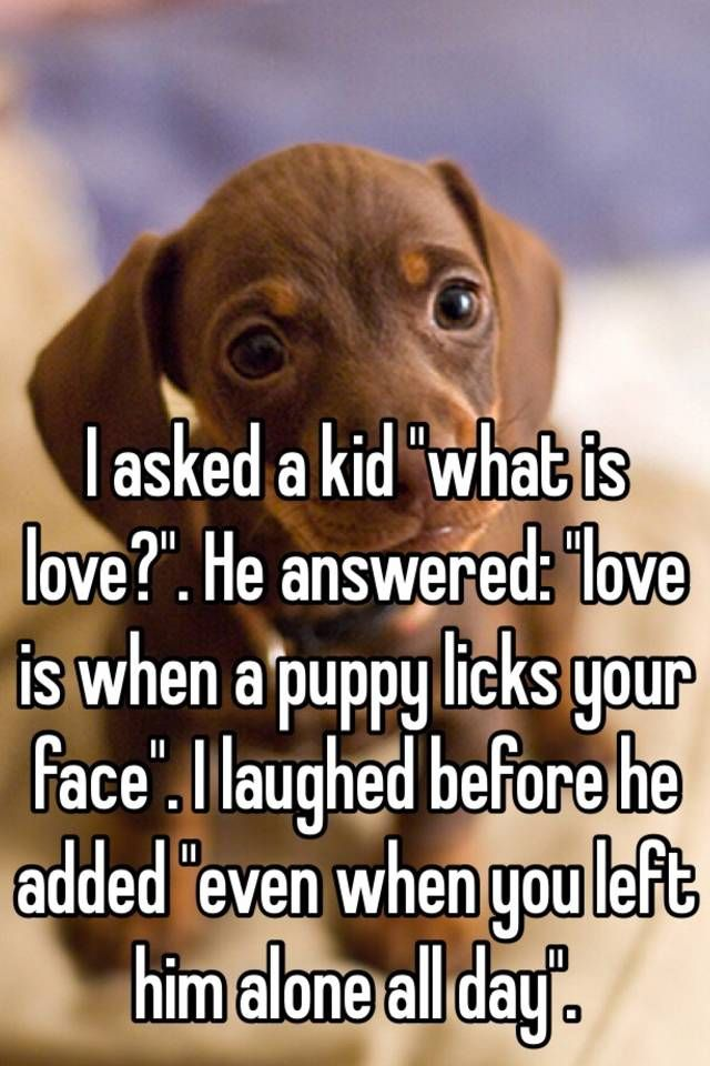 "I asked a kid ""what is love?"". He answered: ""love …"