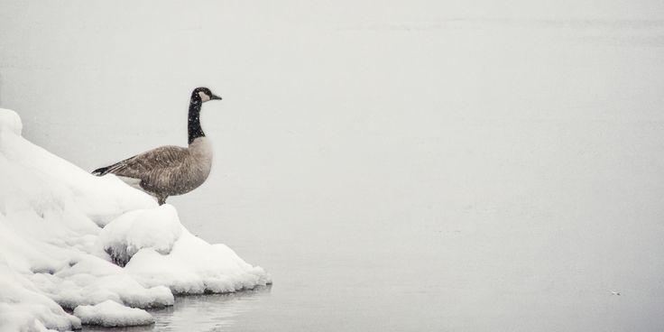 Canada Goose Port Credit, Mississauga, Ontario