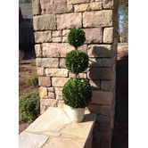 """Found it at Wayfair - Boxwood 36"""" Topiary Triple Ball Tree in Pot"""