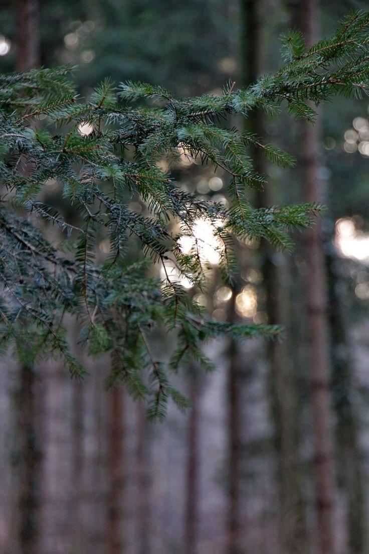 Into the Woods, Austria.
