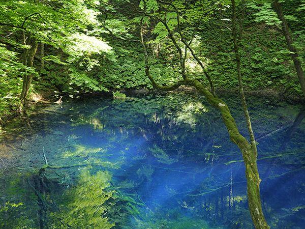 JAL - 絶景コレクション:青森県 十二湖(青池)(JAL旅プラスなび)