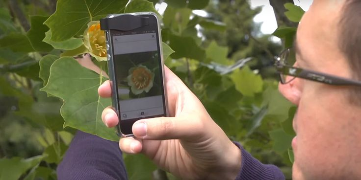 Shazam app for ifentifying plants . Some scientists have estimated that there are about 400,000 flowering plant species in the world — that's a lot of plants. So you'll be okay if you d