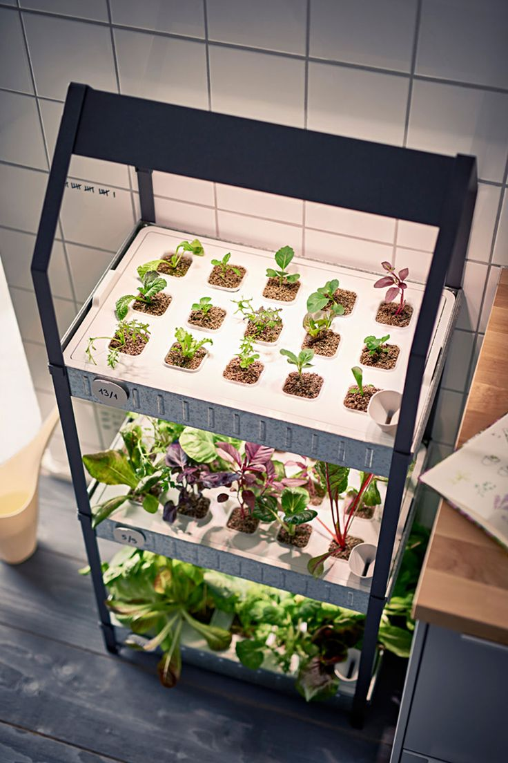 die besten 25 hydrokultur pflanzen ideen auf pinterest hydrokultur garten aquaponics. Black Bedroom Furniture Sets. Home Design Ideas