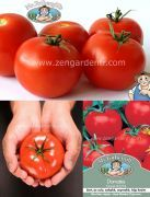 oturak domates tohumu