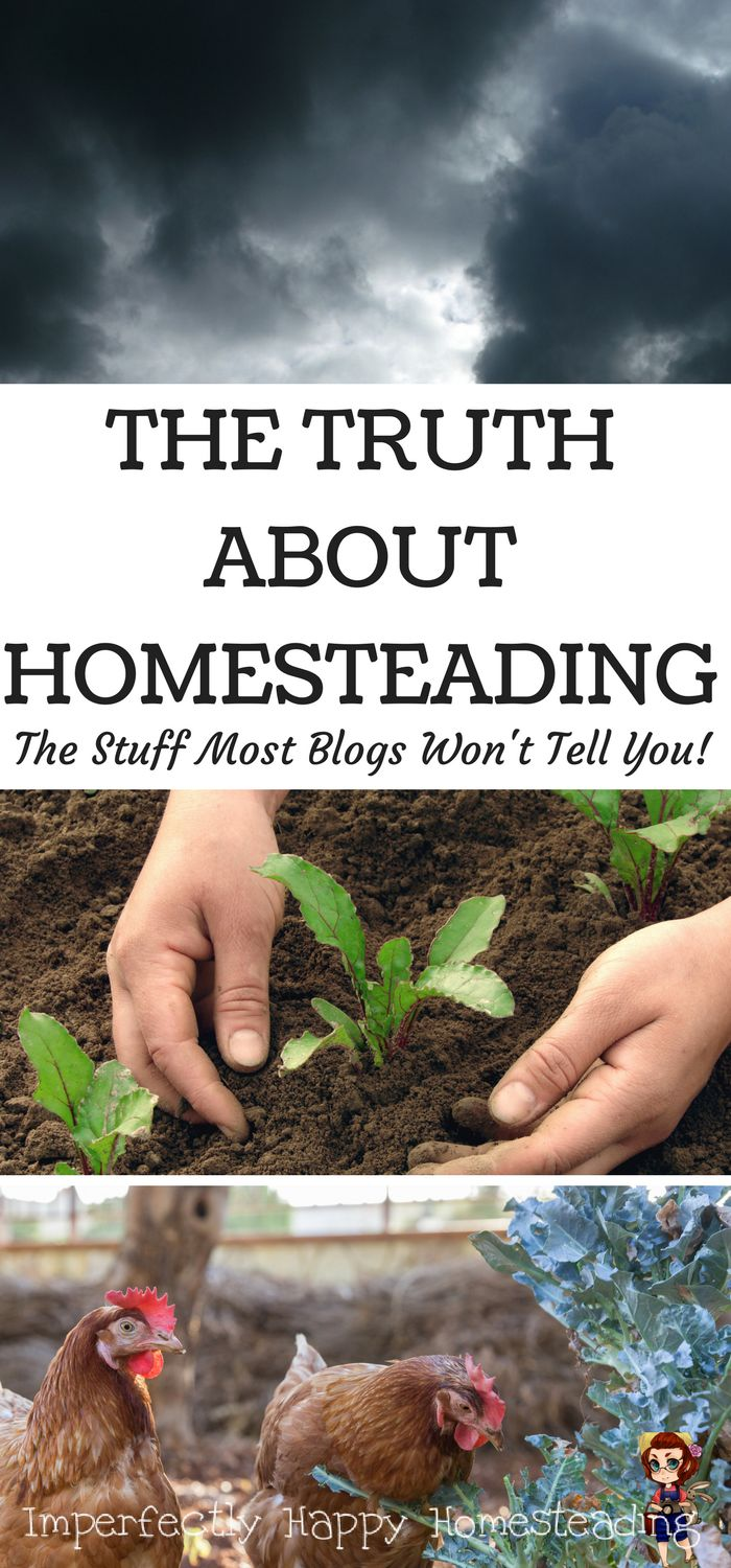 9879 best backyard farming and homesteading images on pinterest