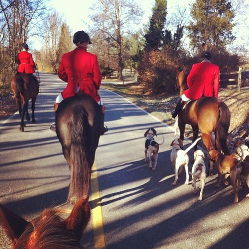 427 Best Images About Fox Hunt On Pinterest