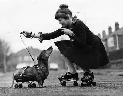 girl and her skating dog                                                                                                                                                                                 More