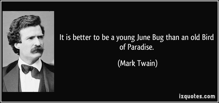 It is better to be a young June Bug than an old Bird of Paradise. (Mark Twain) #quotes #quote #quotations #MarkTwain