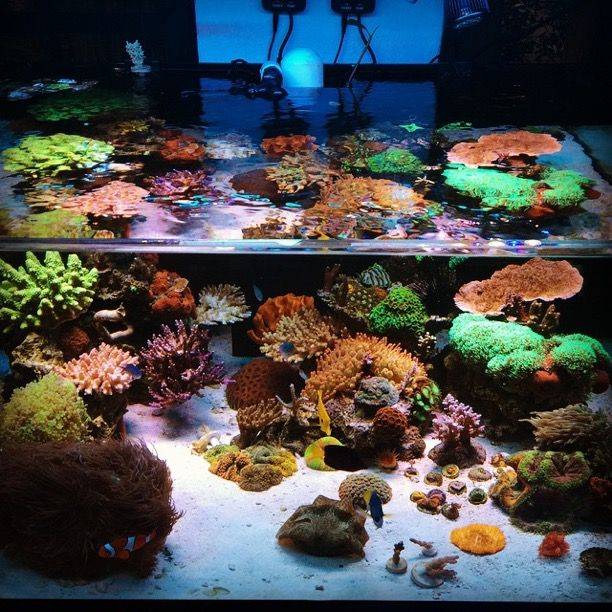 873 Best Images About Reef Tanks On Pinterest