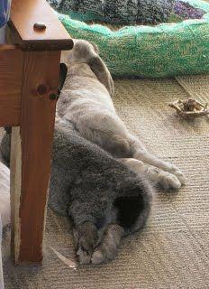 Adopting a Bunny - Bibble's Bunny Guide