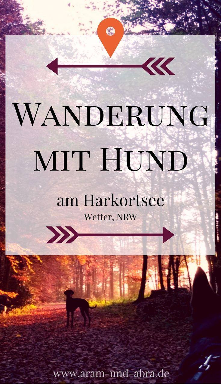 Wanderung mit Hund im Wald am Harkortsee bei Wetter, NRW.  Mit vielen Fotos.  Von: Aram und Abra