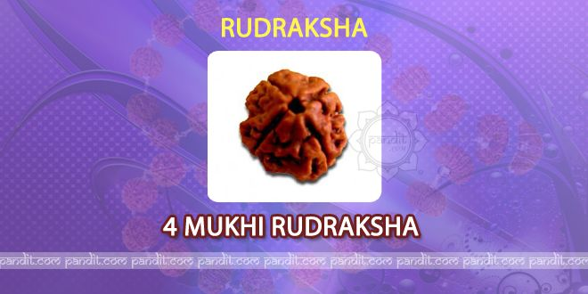 4 mukhi Rudraksh by Pandit Rahul Kaushal ------------------------------------------------------   It has 4 lines on it and is image of God Brahma itself.  It gives Dharma, Arth, Kaam, and Moksha to individual who wears it. It is good for person who is weak in studies and who stammers while speaking. It is beneficial for health and mental problems too. Nepali Rudraksh is the best Rudraksh and is easily available. http://www.pandit.com/4-mukhi-rudraksh/