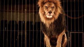 Arriva il circo con gli animali, la Lav invita al boicottaggio