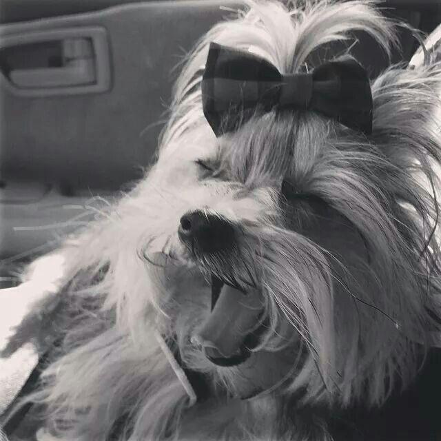 Misa Minnie ♥