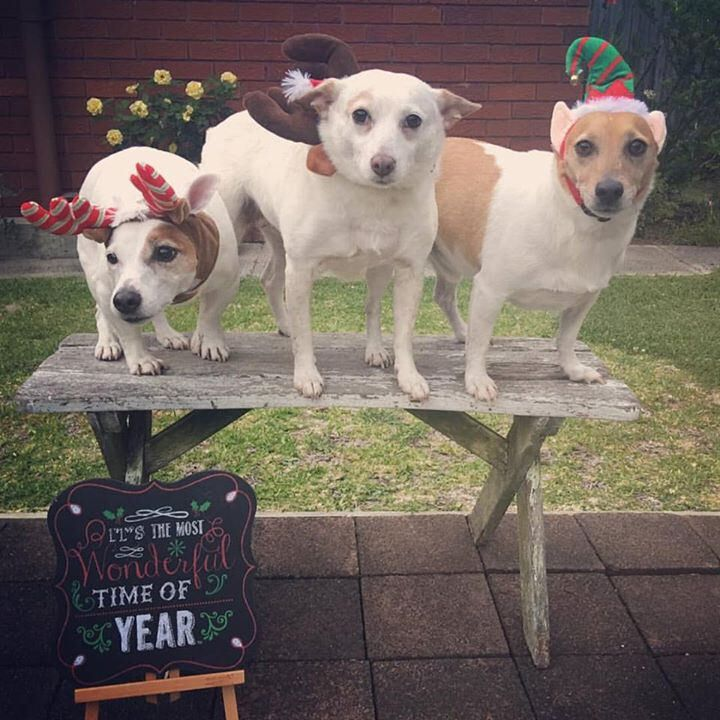 An impromptu iphone family shot (not without protest) to wish you all a wonderful Christmas. However you recognise the day, stay safe and blessings to you and your family from ours 💕🐶🎄🐶🎄🐶💕