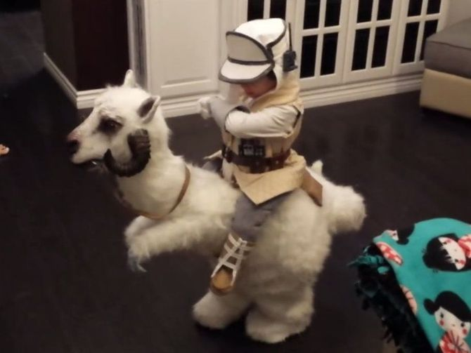 May the cute be with you. A pint-size Star Wars fan gets to cosplay as Luke Skywalker riding a tauntaun this Halloween.