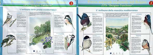 birdwatching in Liguria, osservazione e riconoscimento degli uccelli avvistamenti hot spots racconti emozioni Una struttura didattica in un hot spot per la migrazione...