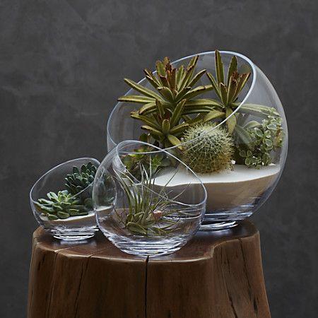 17 best images about terrarium on pinterest. Black Bedroom Furniture Sets. Home Design Ideas
