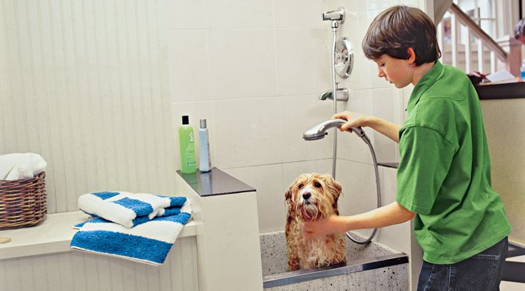 How to Plan a Dog Cleaning Station - A dedicated washing area for your most dedicated friend makes bath time a breeze