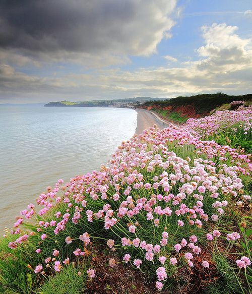 Pretty spring flowers at the sea in - Dawlish, Devon, England, UK.