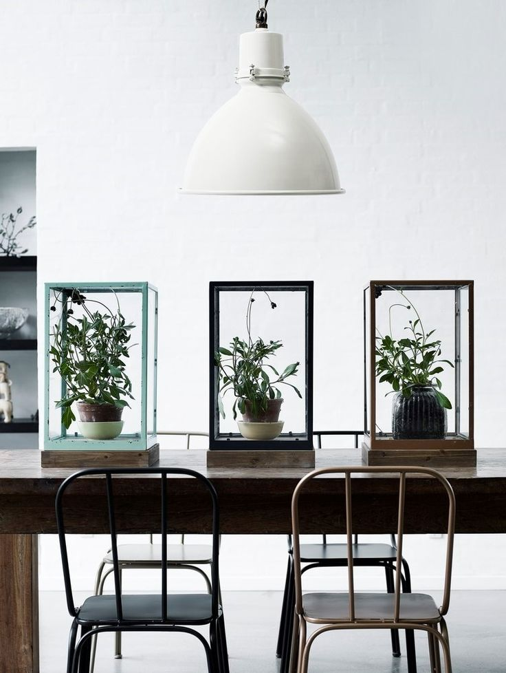 dining space with an industrial feel - oversized factory pendant light and table centrepiece created with potted plants and specimen display boxes from Nordal (Danish brand)   #greenhouse