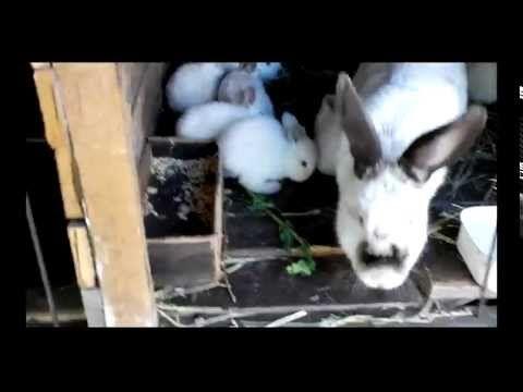Лучшие корма для кроликов, дедушкин рецепт — Яндекс.Видео