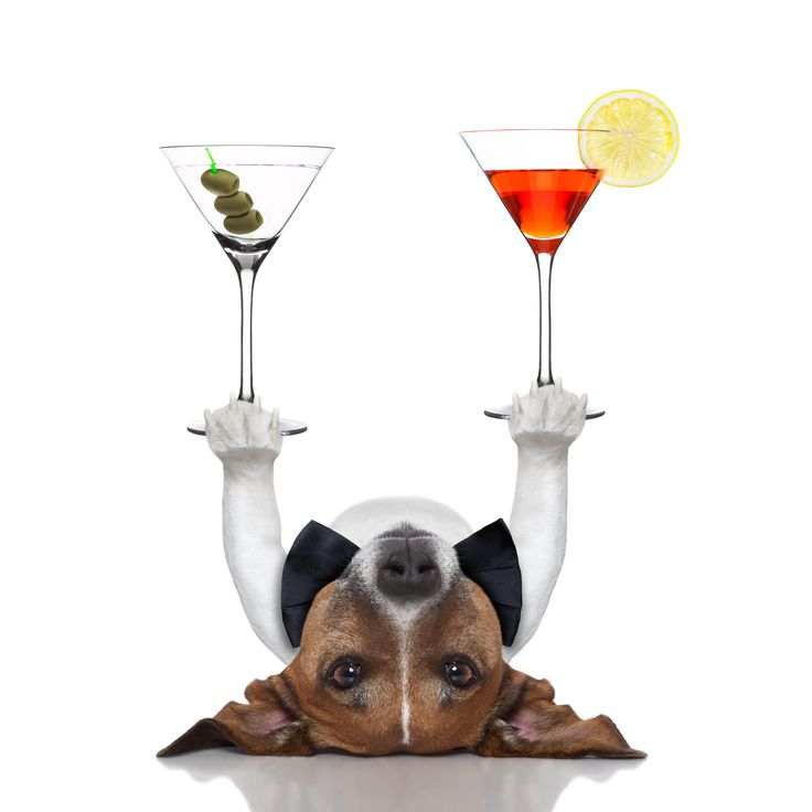 does your dog know any good party tricks? :) #dogs