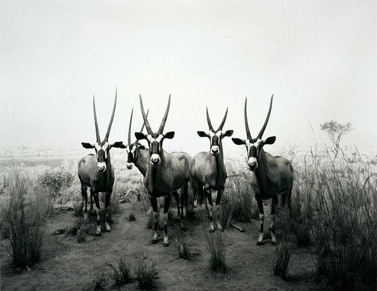 "Hiroshi Sugimoto - ""Dioramas"" series"