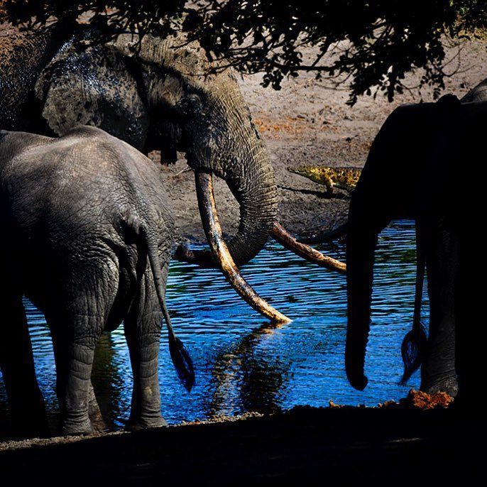 """natgeo: """"Photo by @mattiasklumofficial A small herd of African elephants at a water hole in South Africa."""