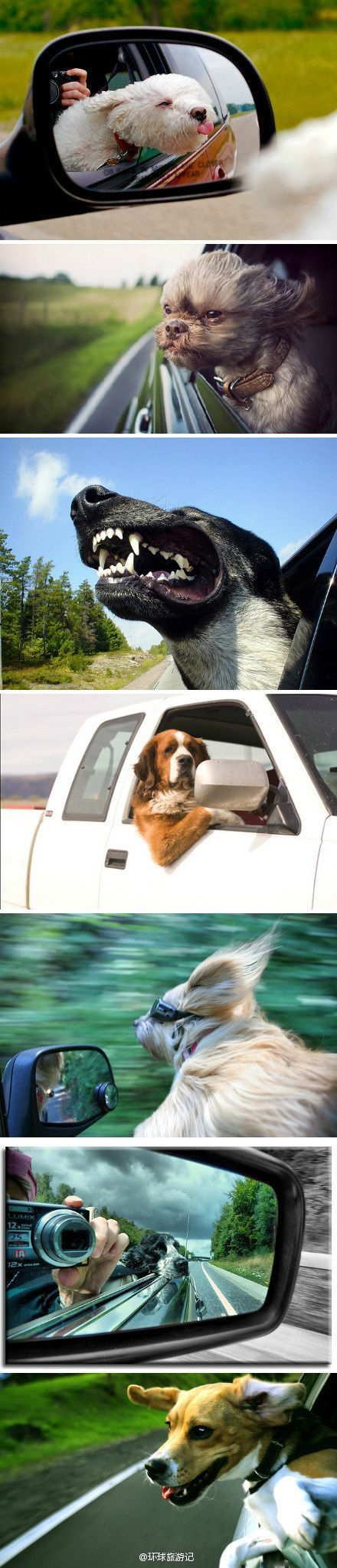 Dog's love the car rides, but remember for there safety, don't let them hang there heads out.  This is harmful to not only their eyes, but a accident waiting to happen.  A simple crack in the windows is plenty, and they'll love it just the same.