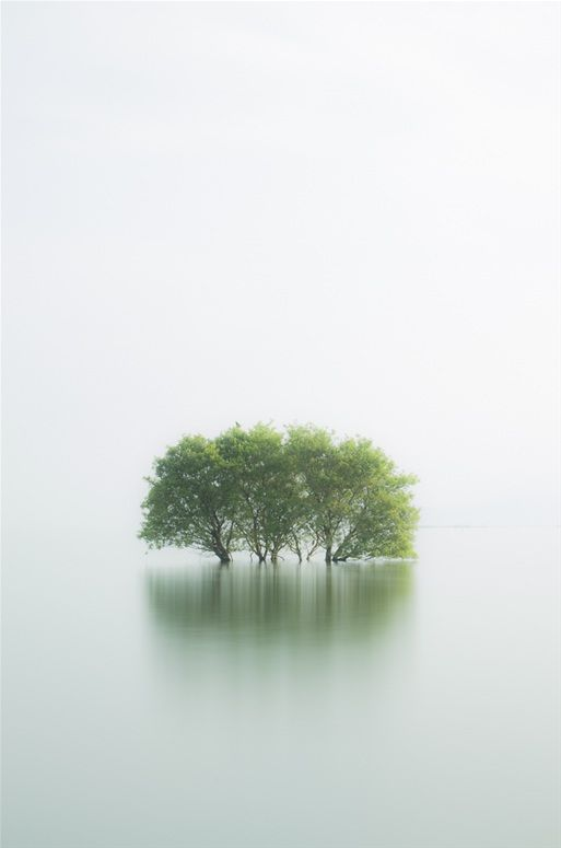 Oddly intriguing - and paradoxical: Anxious (flood? are the trees drowning? are the other living things/people okay?) yet Zen...