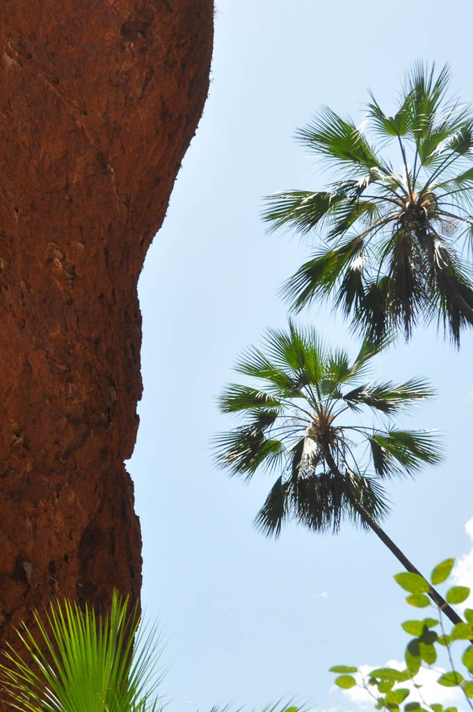 Palm trees in the outback // www.hummingbirdaway.com