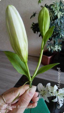 Это продолжение мастер-класса по белой лилии. В первой части мы сделали цветок лилии: http://stranamasterov.ru/node/1055126 . Здесь мы будем учиться делать листики, бутоны, а также собирать все это в ветку. фото 26