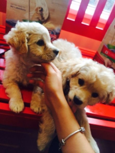Beautiful mixed breed small dogs for sale