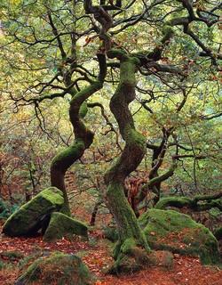 """Dancing Trees"" by Joe Cornish"