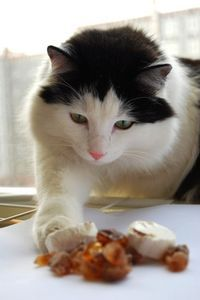 Grain free cat treats  1 cup minced cooked turkey  1/2 cup mashed cooked pumpkin  1 tablespoon oil