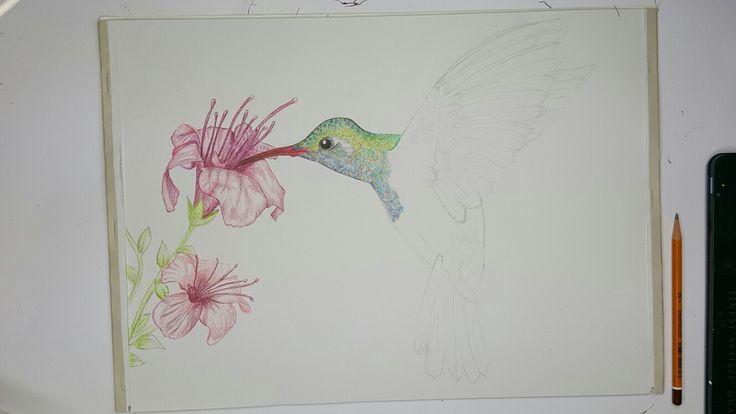 "Tomorrow i will ""tangle"" it ! #Humming-bird #Zentangle #Doodle #Art #pencil #flowers #Draw"