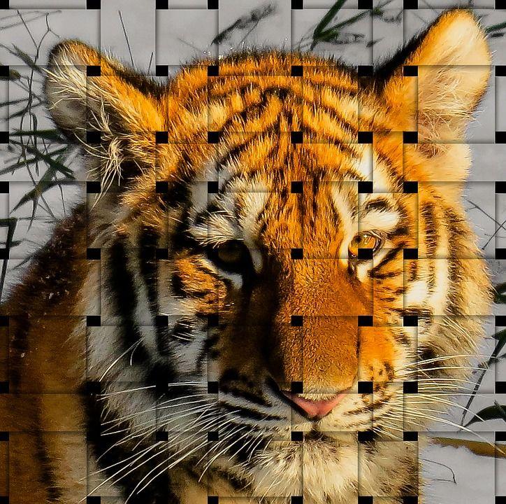 Tigre, Superposición De Imágenes, Wattle, Animales