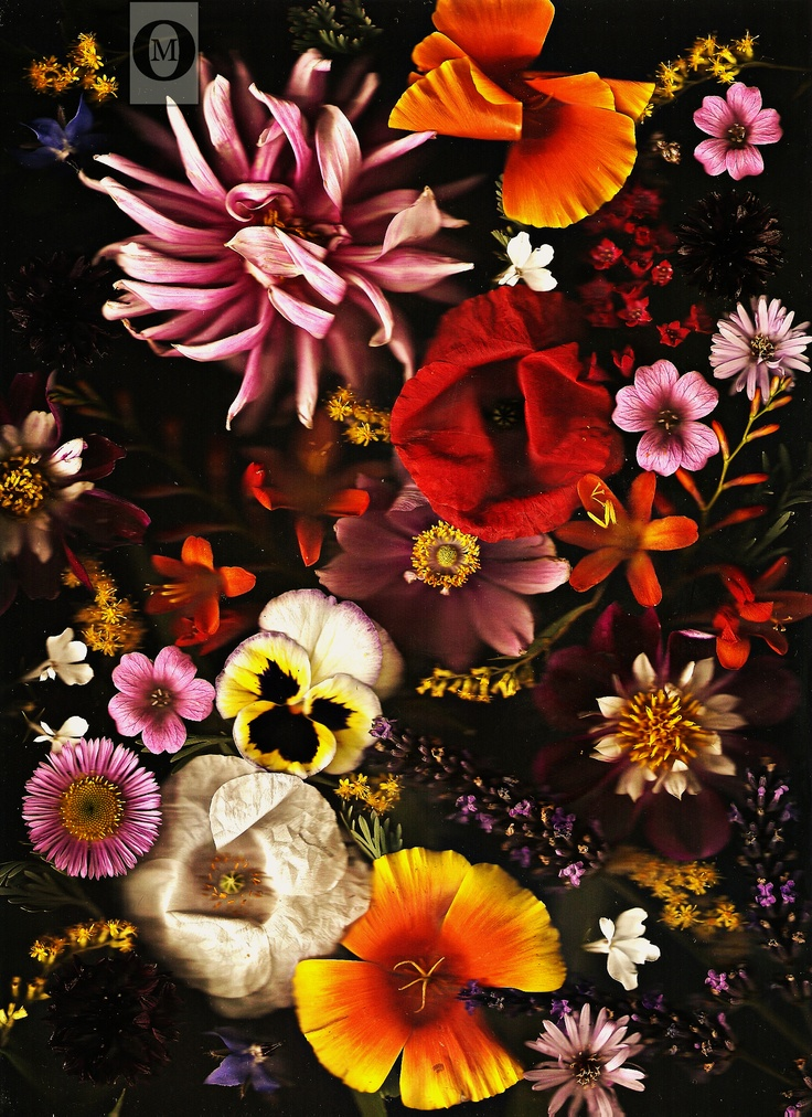 Scan-ography | Scanography in 2019 | Floral artwork ...
