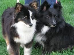 82 Best Images About Dog Cross Breeds On Pinterest