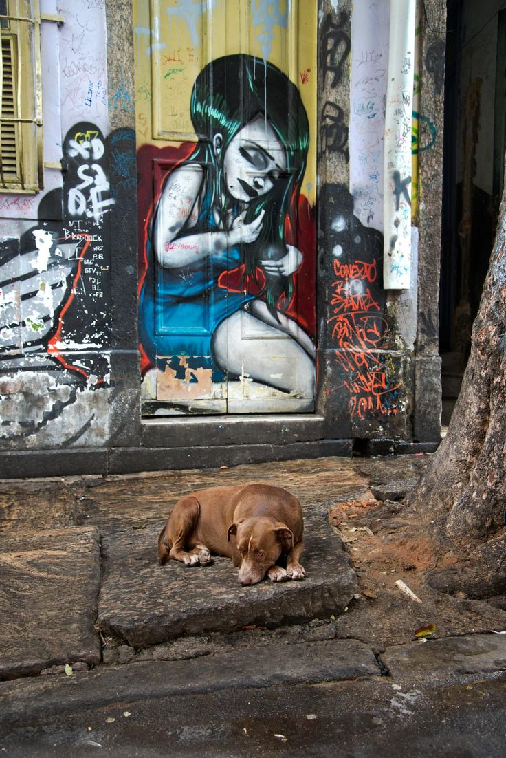 All Creatures Great and Small | Steve McCurry - Rio de Janeiro, Brazil