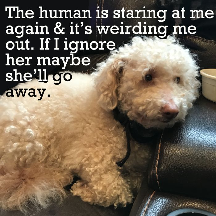 Thought it would be fun to do a puppy meme week! We're going to post a new meme every day this week and we'd love to see pics or memes of your own pets! At the age of 6, Teddy is the eldest and therefore wisest dog in the pack! (Yah, right! LOL)