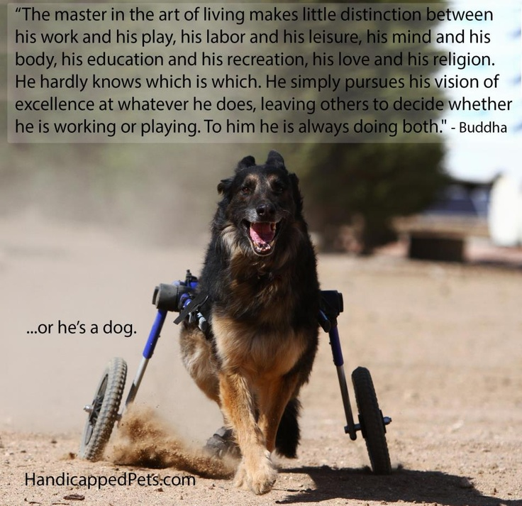 Rehab Act Service Dogs