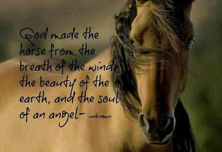 God made the #horse with the breath of the wind, the beauty of the earth and the soul of an angel. #quote #animals