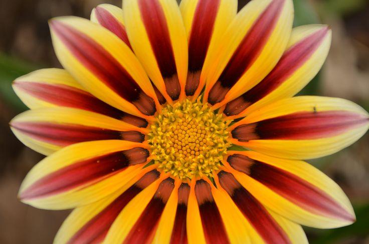 in the park in Bathurst, April flower