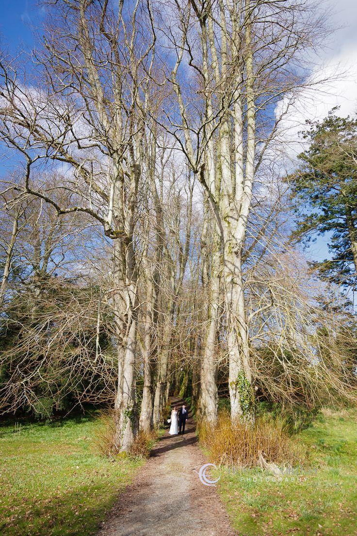 Bride & Groom photographed among very tall trees