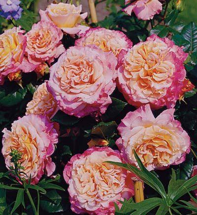 364 best Flowers images on Pinterest   Outdoor plants, Backyard ...