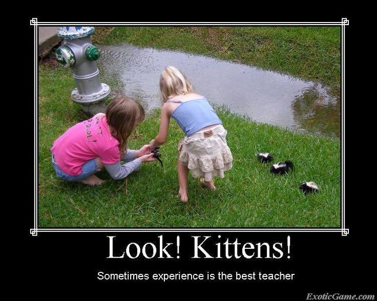 Look! Kittens!: Animals, Funny Stuff, Funnies, Humor, Kittens, Baby, Kid