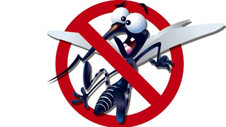 Our Battle With #Dengue #Fever #denguefever #mosquito #health