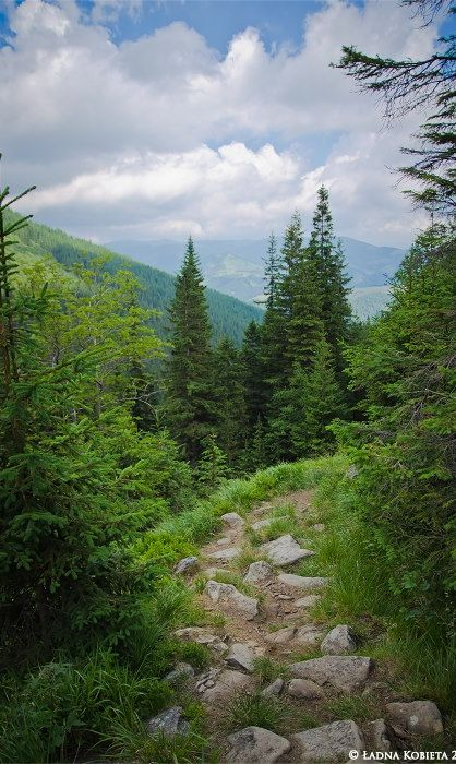 Carpathian Mountain path, western Ukraine. Carpathian Mountains are considered to be the Green Pearl of Ukraine. It is one of the most popular resorts and tourist centers of the country.   From Iryna